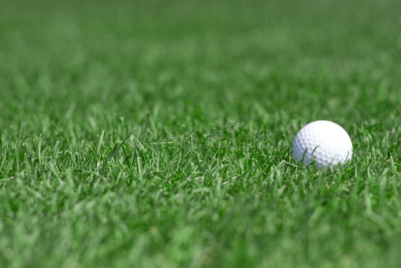 Grama verde e golfball imagem de stock