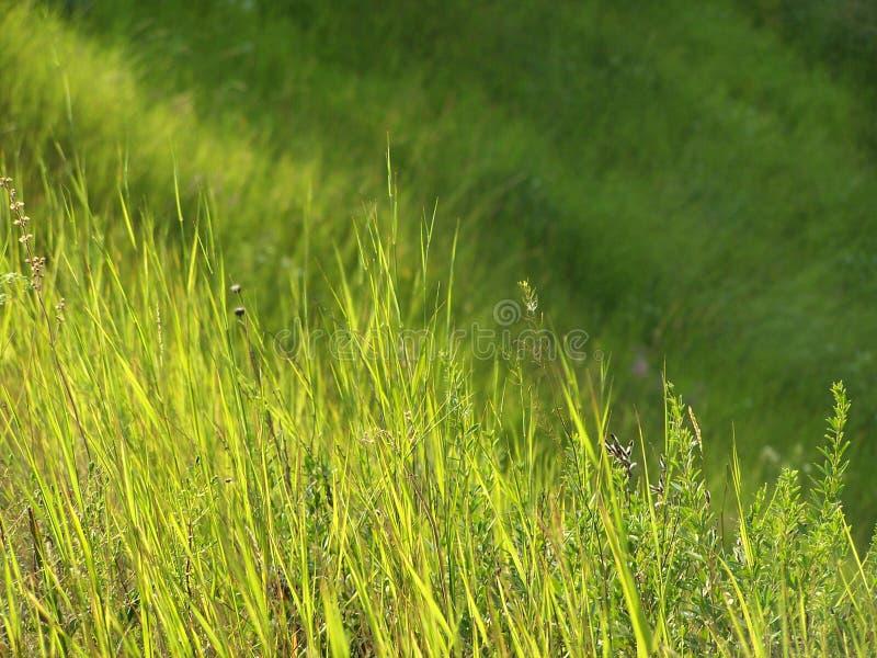 Grama verde e luz solar fotos de stock royalty free