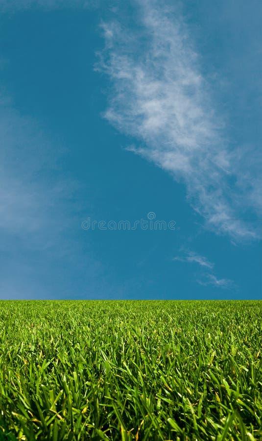 Grama verde e o céu imagem de stock royalty free