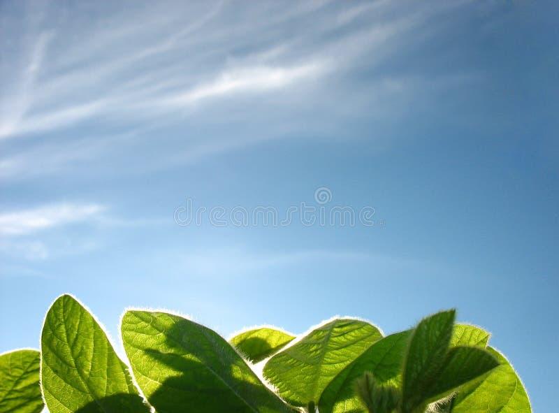 Grama verde e o céu azul imagens de stock royalty free