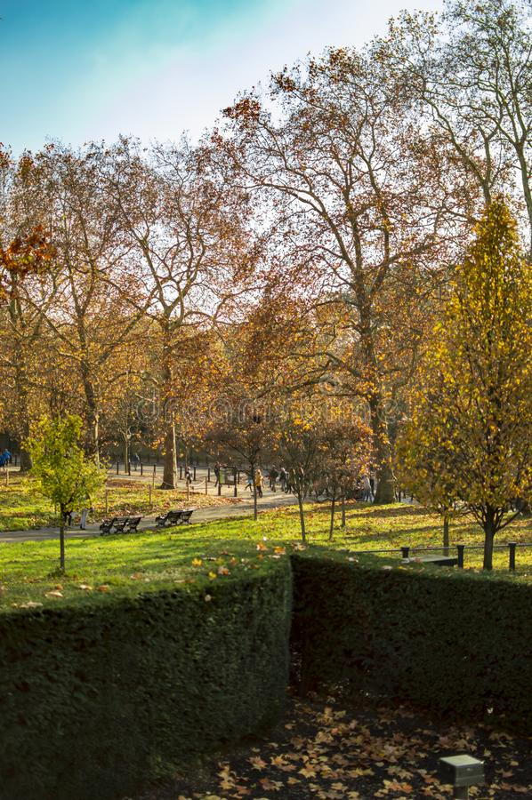 Grama verde em Hyde Park Londres e em ?rvores de bordo foto de stock