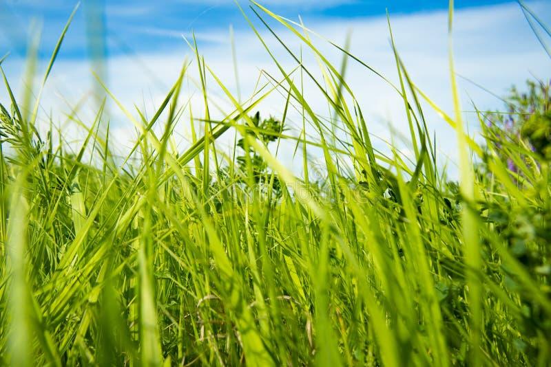Grama verde em um dia ensolarado imagens de stock