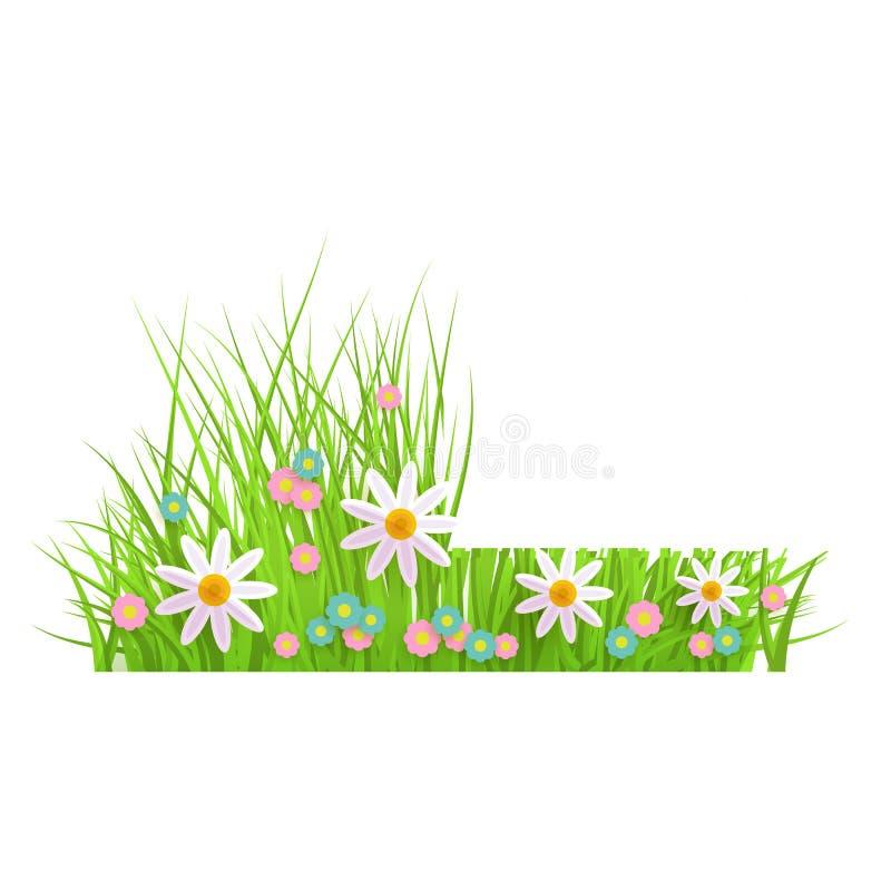 Grama verde floral da mola e beira do gramado com camomila e margaridas, antes e depois da sega ilustração stock