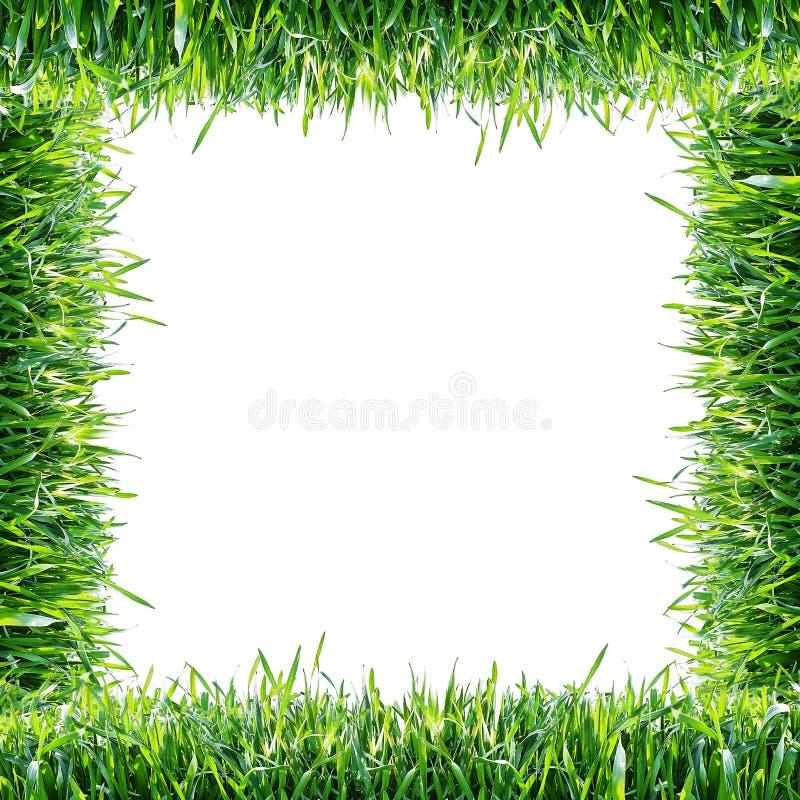 Grama verde Frame natural foto de stock royalty free