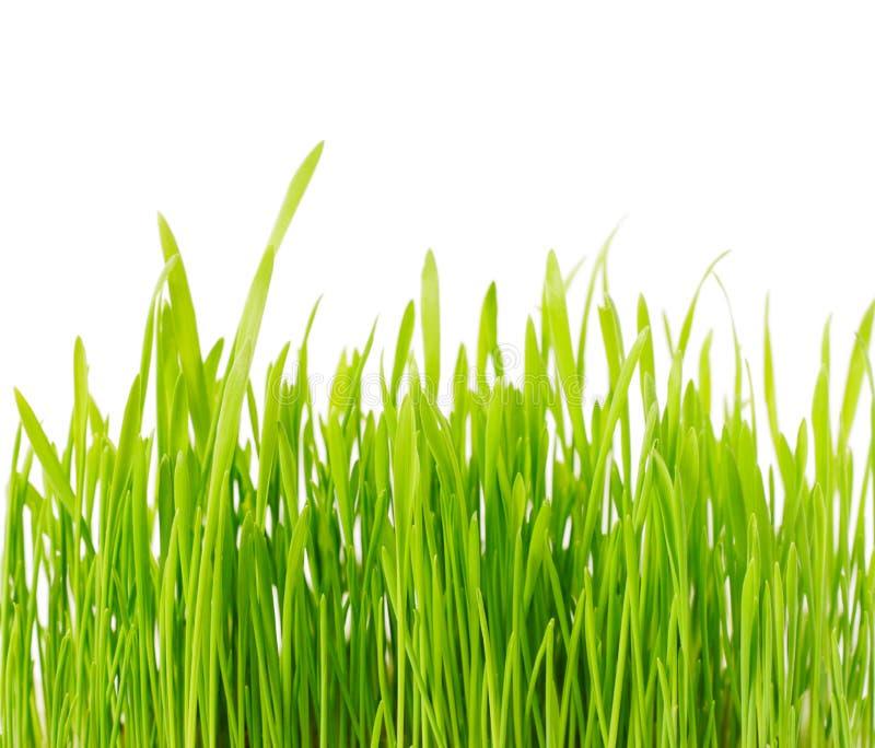 Grama verde fresca foto de stock