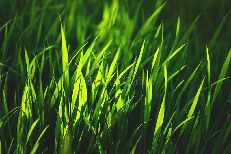 Grama verde fresca imagens de stock