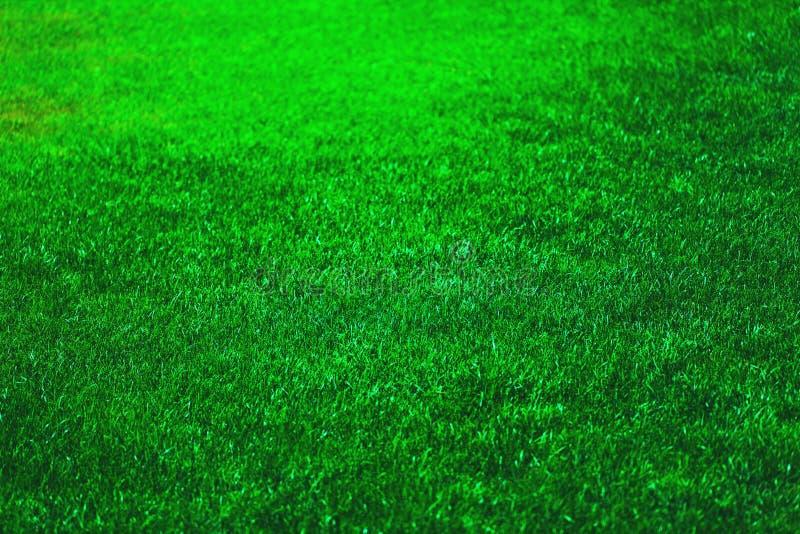 Grama verde fresca foto de stock royalty free