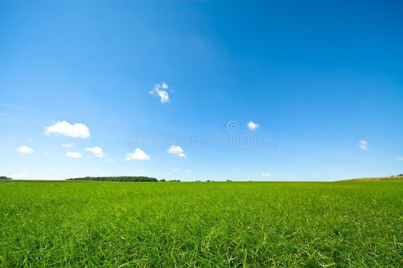 Grama verde fresca com brilhante fotos de stock royalty free
