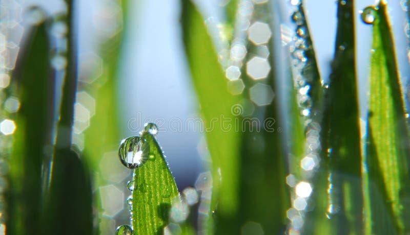 Grama verde fresca com gotas imagens de stock