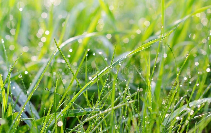 Grama verde fresca com gotas da água imagens de stock