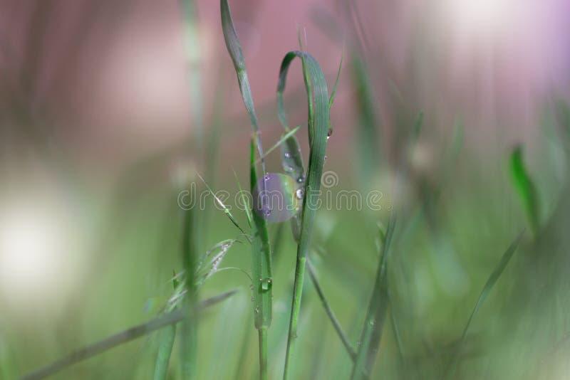 A grama verde fresca com gotas de orvalho fecha-se acima Backgroun da grama verde fotografia de stock