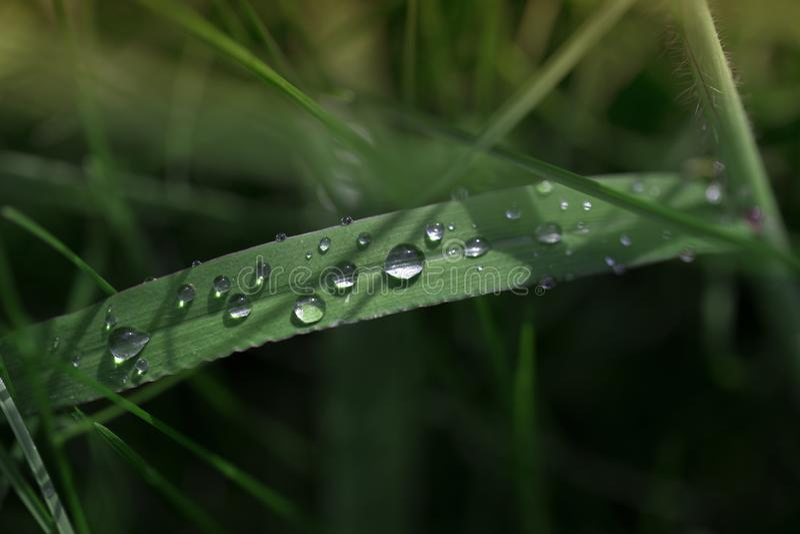 A grama verde fresca com gotas de orvalho fecha-se acima Fundo da grama verde Gota do orvalho na manhã na folha imagens de stock