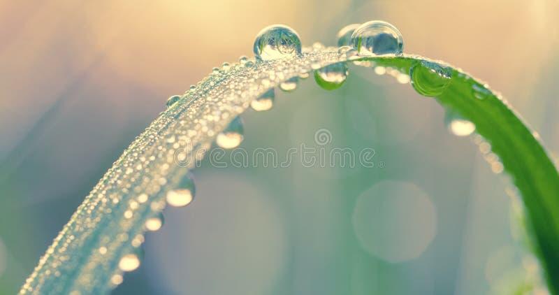Grama verde fresca com gotas de orvalho no fim da manhã acima Fundo da natureza imagem de stock royalty free