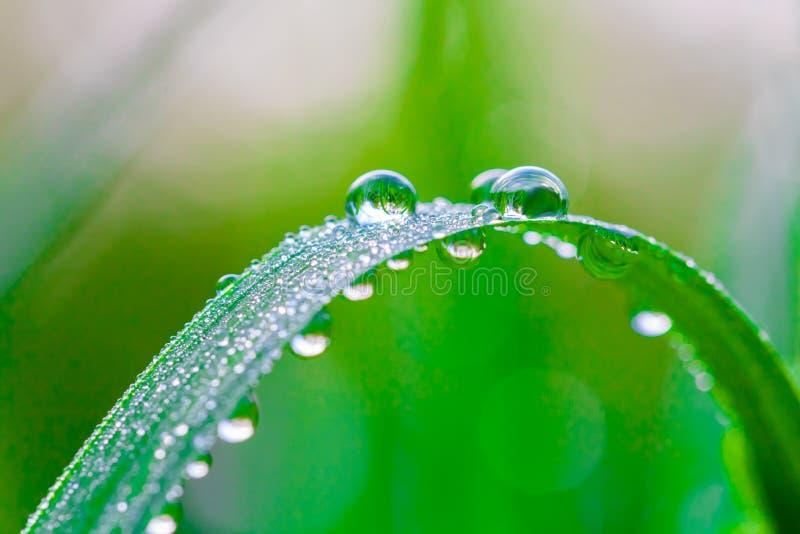 Grama verde fresca com gotas de orvalho no fim da manhã acima Fundo da natureza fotos de stock