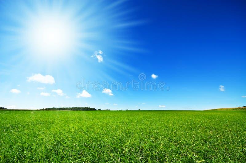 Grama verde fresca com o céu azul brilhante fotos de stock royalty free