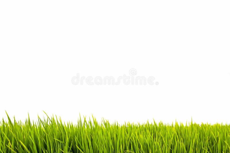 Grama verde fresca como a beira no lado mais baixo do quadro horizontal em um fundo branco vazio sem emenda imagem de stock