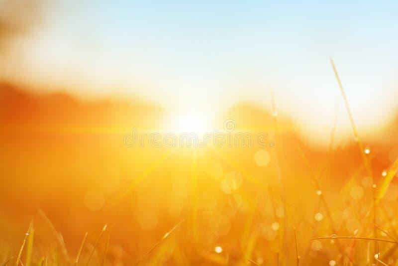 Grama Grama verde fresca da mola com o close up das gotas de orvalho Sun Foco macio Fundo abstrato da natureza E imagens de stock