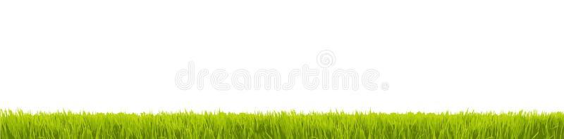 Grama verde fresca no grande panorama largo como a beira do quadro em um fundo transparente branco vazio sem emenda ilustração royalty free