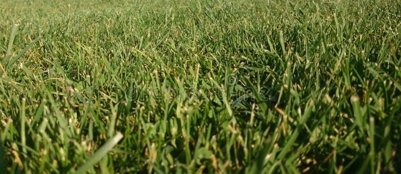Grama verde, fundo do prado imagens de stock