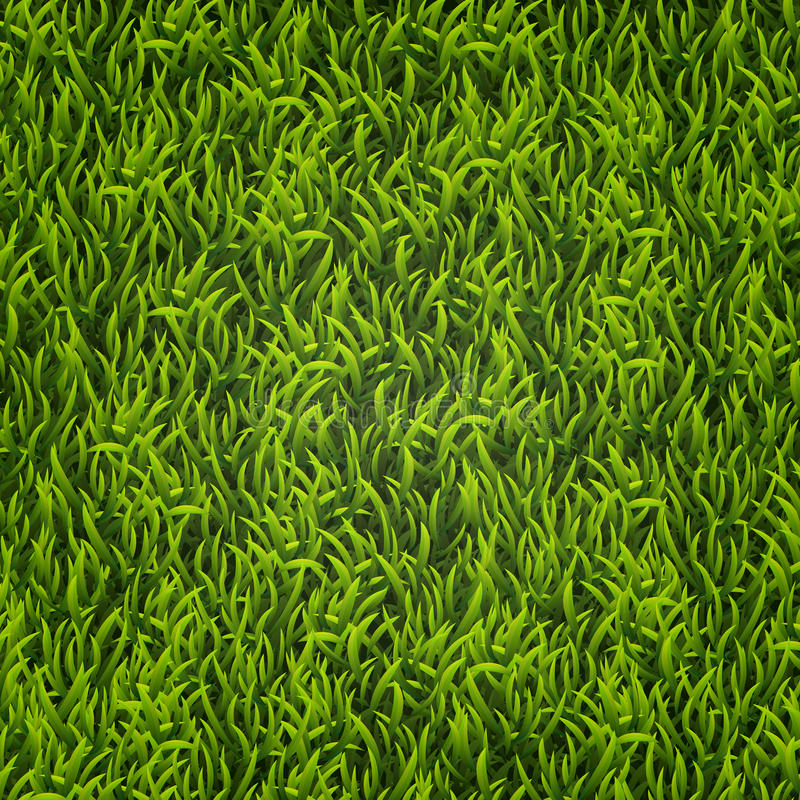 Grama verde Fundo natural Textura Grama alta Grama verde da mola fresca ilustração stock