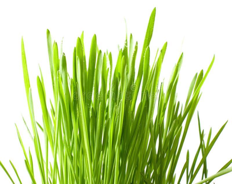 Grama verde isolada imagem de stock royalty free