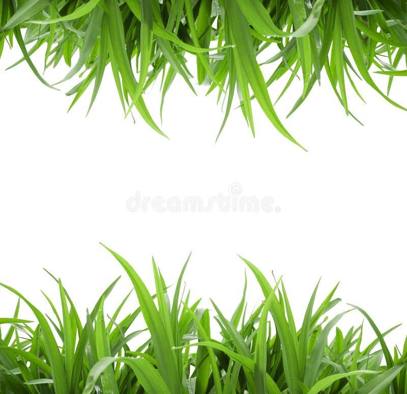 Grama verde isolada fotografia de stock