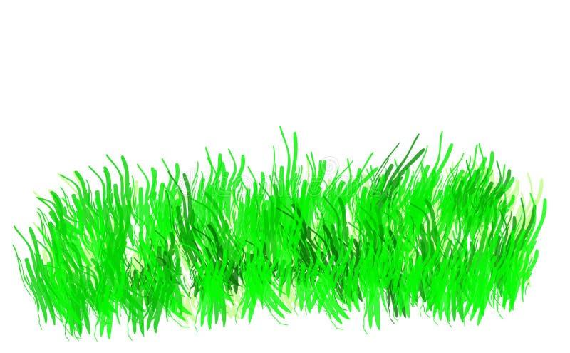 Grama verde isolada no backgraund branco ilustração stock