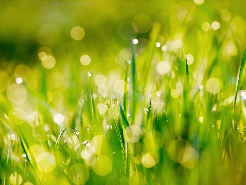 Grama verde molhada foto de stock royalty free