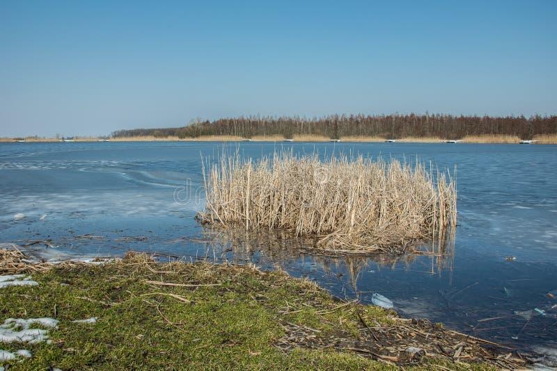 Grama verde na borda de um lago congelado e de juncos Horizonte e céu azul imagem de stock royalty free