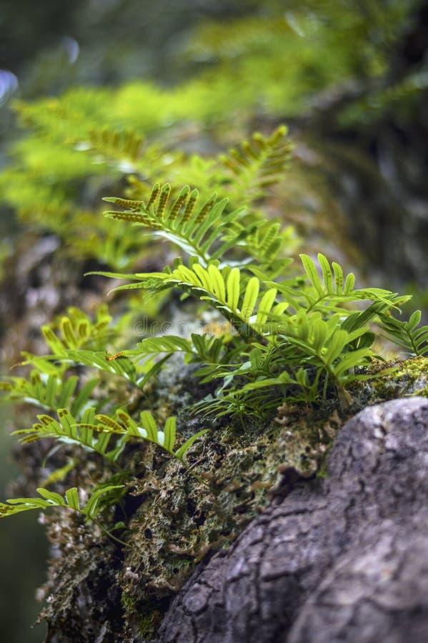 Grama verde na floresta fotos de stock