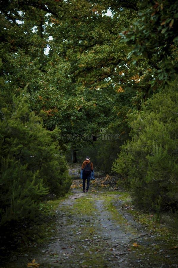 Grama verde na floresta imagem de stock royalty free