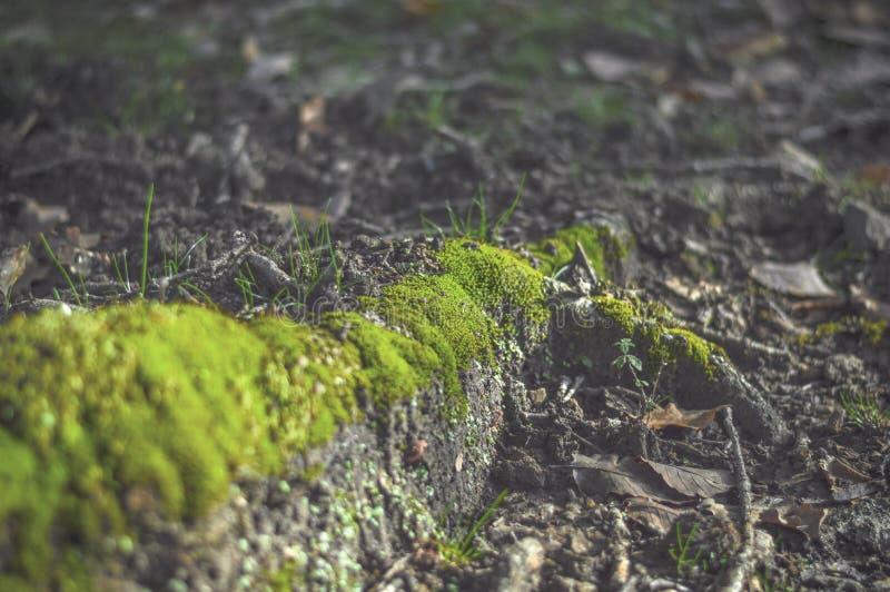 Grama verde na floresta imagem de stock