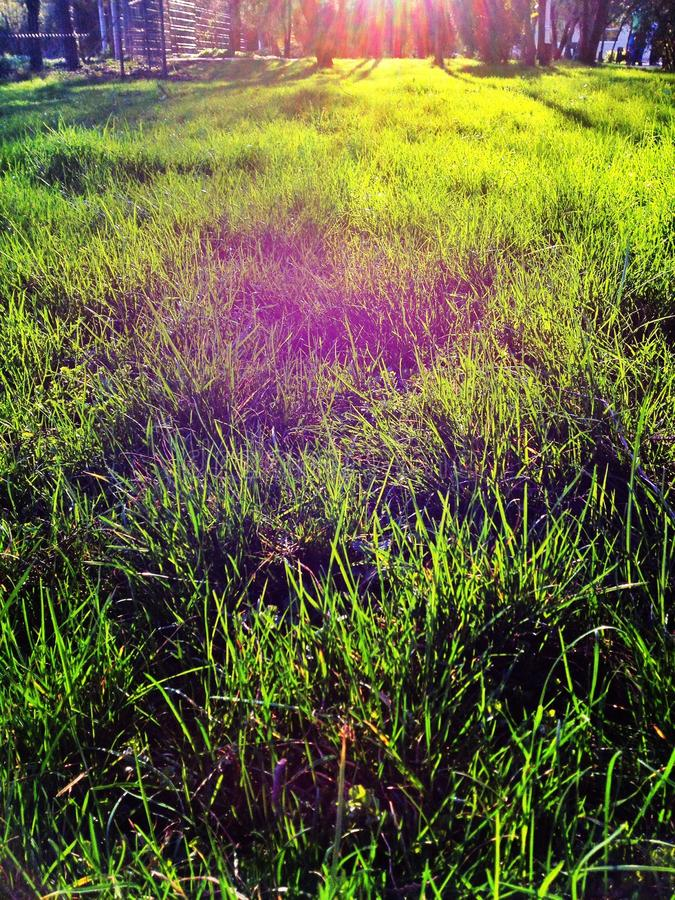Grama verde na luz solar foto de stock
