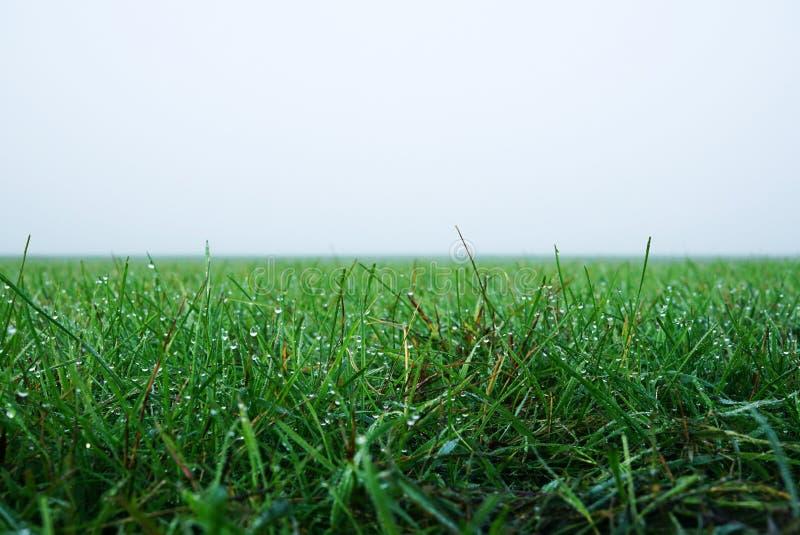 Grama verde na névoa da manhã muitas gotas de orvalho na grama imagem de stock royalty free