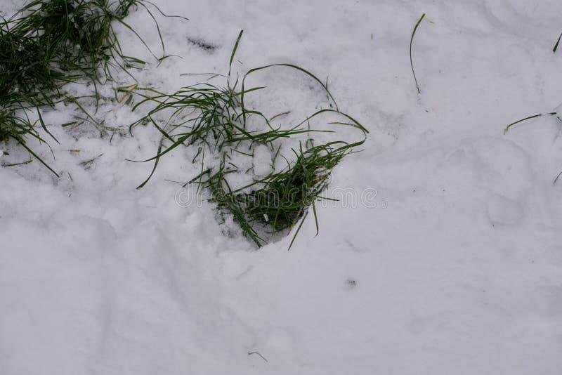 Grama verde na neve imagens de stock