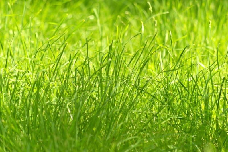 Grama verde nova fotografia de stock royalty free
