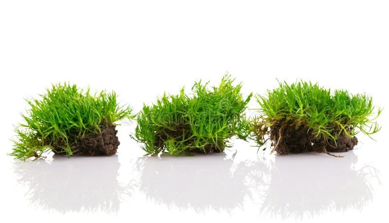 Grama verde nova com solo imagens de stock