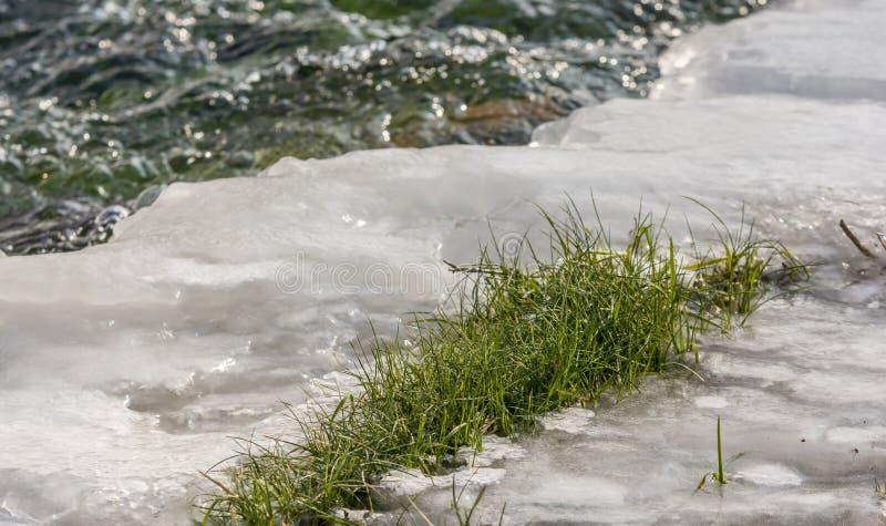 A grama verde provoca as temperaturas geladas do inverno imagens de stock
