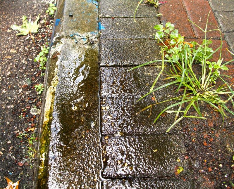 Grama verde que cresce fora da pedra no passeio e no freio molhado, textura fotos de stock royalty free