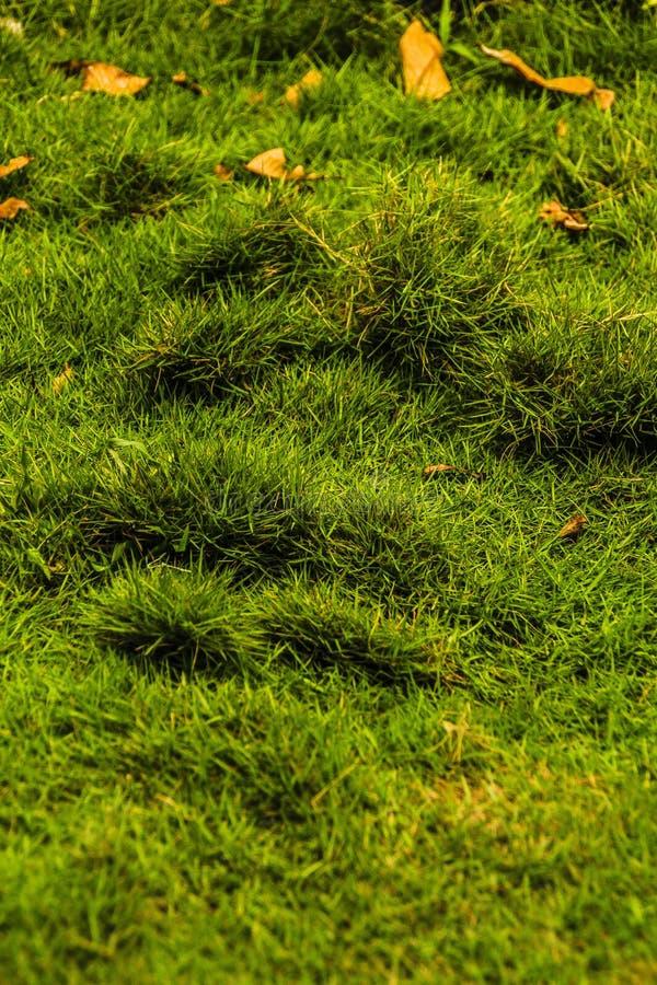 Grama verde que prospera no campo de jogos das crianças fotografia de stock royalty free