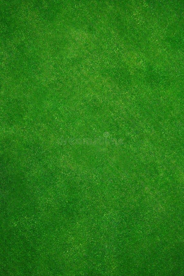 Grama verde real foto de stock