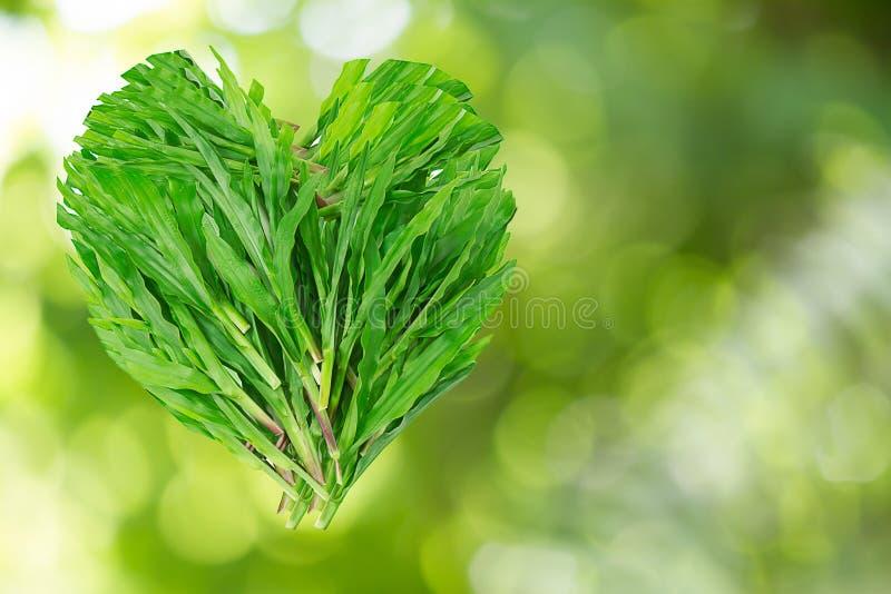 A grama verde sae no coração dado forma no fundo borrado do bokeh foto de stock royalty free