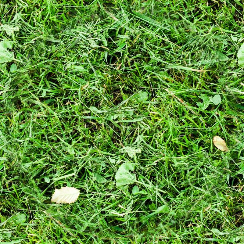 Grama verde segada sem emenda Fundo, textura imagens de stock