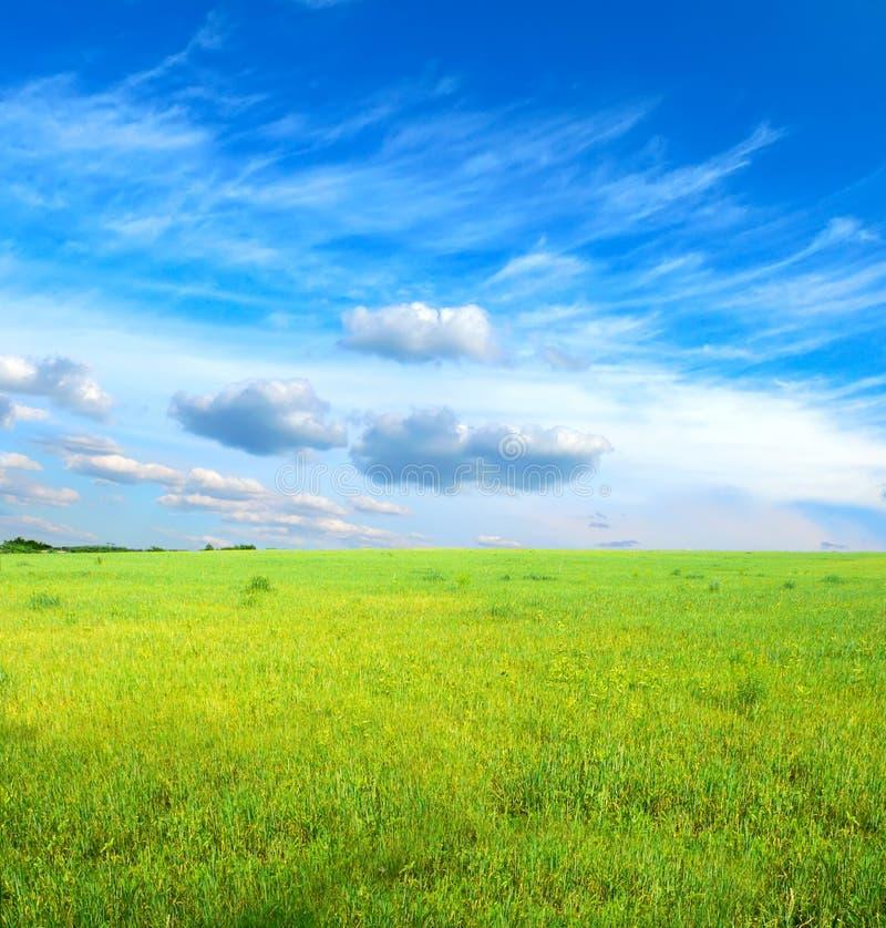 Grama verde sob o céu azul foto de stock royalty free