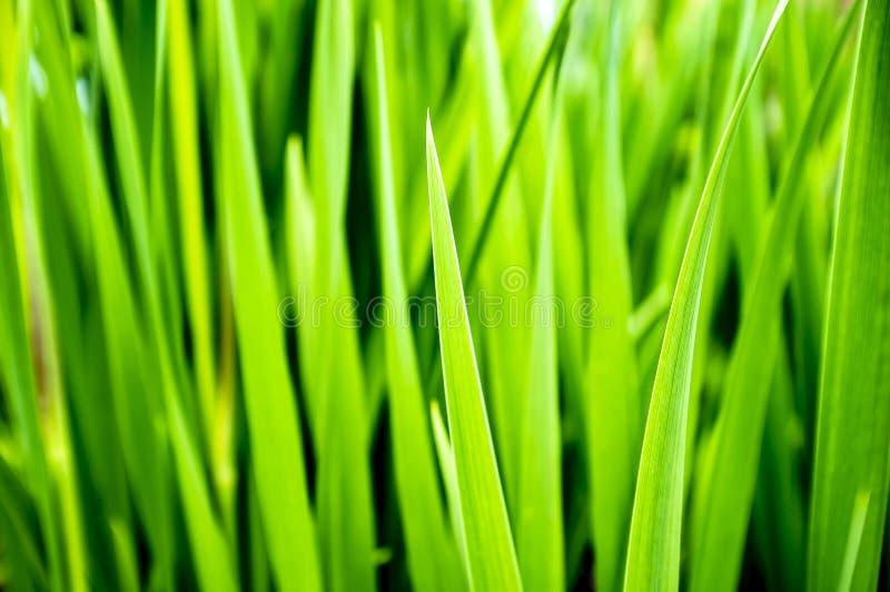 Grama verde suculenta, dia de verão wallpaper fotos de stock royalty free