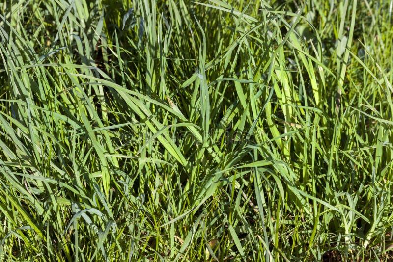 Grama verde Sunlit foto de stock