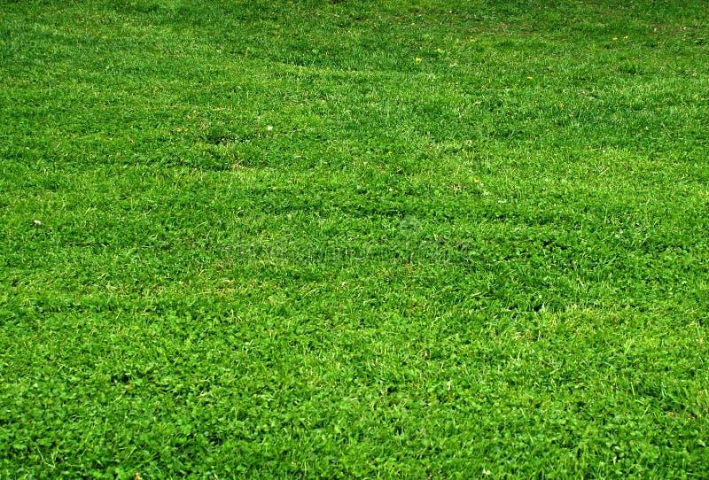 Grama verde, textura fotografia de stock royalty free