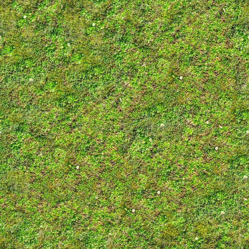 Grama verde Textura sem emenda de Tileable fotografia de stock