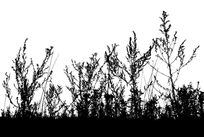 Grama, vetor da planta ilustração stock