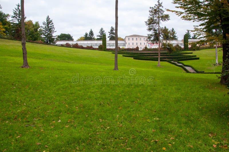 Gramado aparado verde perfeito com as folhas amarelas caídas foto de stock royalty free